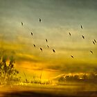 Murmurations2 by Mark Wade