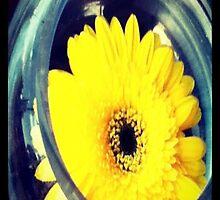 A flower a day. by aussiecandice