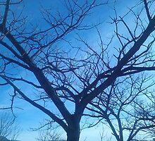 alberi  by ventofreddo