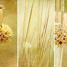 Seed  by Margi