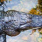 American Alligator. by Nick Egglington
