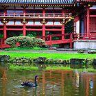Black swan by raymona pooler