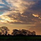 Clouds Above Trees by Elizabeth James