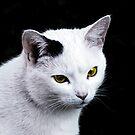 Cat Portrait by vivendulies