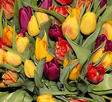 An Ocean Full Of Tulips  by vbk70