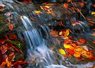 Leaves in the Stream by Paul Wolf