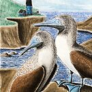 Blue Footed Booby by jkartlife