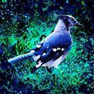 Beautiful Blue by Pat Moore