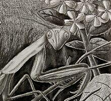 Praying Mantis by jkartlife
