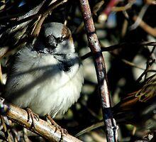 Sparrow Hiding by WildestArt