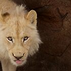 White Lion by PrecisionImages