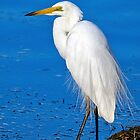 White Heron. by Nick Egglington
