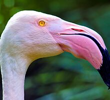 Face To Face With A Pink Flamingo. by Nick Egglington