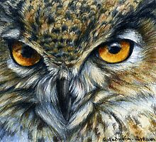 Owl 811  by schukinart