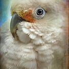 Finer Feathered Friends: Goffin Cockatoo by alan shapiro