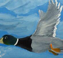 Mallard Drake in Flight by towncrier