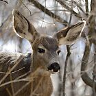 Buck on deer path by themanitou