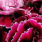 Valentine's Carnations by ekenney87