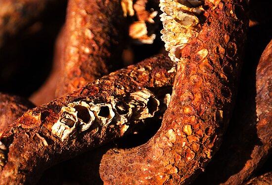 Barnacles & Rust by Susie Peek