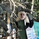 White-faced Monkey 1 by jmkay9876