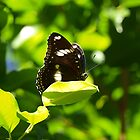 Zoo Butterfly by kalaryder