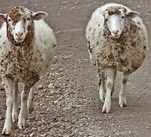 MORK & MINDY ' BINDI SHEEP ' by Dawn1951