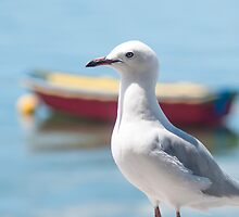 seagull by Anne Scantlebury