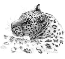 Leopard - Glance Back G2011-004 by schukinart