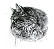 Norwegian Forest Cat G2010-010 by schukinart