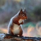 Squirrel by moonunit