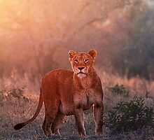 Searching For Cubs by Michael  Moss