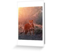 Searching For Cubs Greeting Card