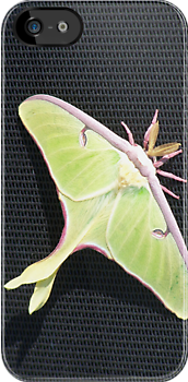 Luna Moth by pateabag