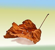 Autun leaf  by Benjamin Gelman