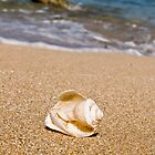 Shells on the sand by Benjamin Gelman