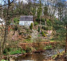Garden beside the Linhouse Water by Tom Gomez