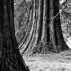 Tree Trunks, Batsford Arboretum 2012 by Michelle Hardy  Photography