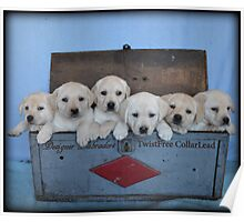 Tool box of Labradors! Poster