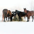 """Horses In Snow"" by lx555"