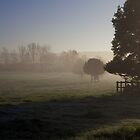 Trees in the mist (2) by Michelle Hardy  Photography