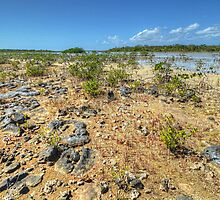 Mangroves in the South Area of Nassau, The Bahamas by 242Digital
