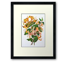 Honeysuckle Bouquet Framed Print