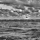 Dark Seascape With Gull by Stefan Kutsarov