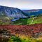 Multicolored Carpet of Wicklow Hills. Ireland by JennyRainbow