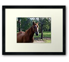 our beaker - a very special little fella ;) Framed Print