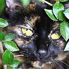 The cat  by RuariFieldPics