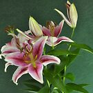 Lillies by Karo / Caroline Evans (Caux-Evans)