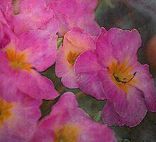 Pink Primroses by walstraasart