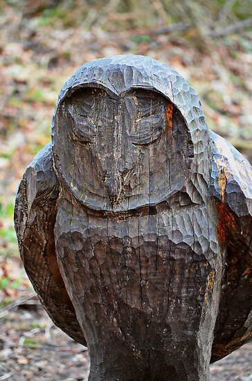 Lesser Spotted Wood Owl by Carol Bleasdale