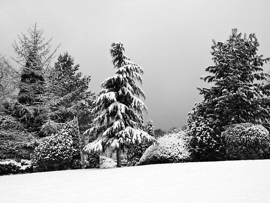 Winter Scene by Paul Barnett